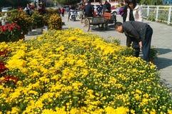 Shenzhen, Cina: Mercato del fiore Fotografia Stock