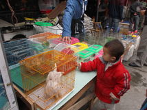 Shenzhen, Cina: mercato dell'animale domestico Fotografia Stock Libera da Diritti