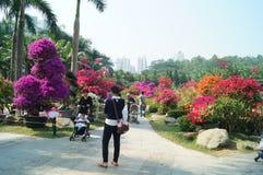 Shenzhen, Cina: Paesaggio del parco di Lotus Hill Fotografia Stock