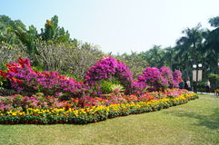 Shenzhen, Κίνα: Τοπίο πάρκων Hill Lotus Στοκ εικόνα με δικαίωμα ελεύθερης χρήσης