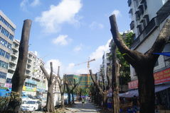 Shenzhen Kina: avverkade träd Arkivfoto