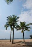 Shenzhen Meisha beach in palm beach Stock Image