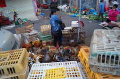 Shenzhen, porcelaine : stalles de poulet Photo stock