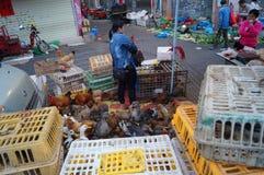 Shenzhen, porcelana: kurczaków kramy Zdjęcie Stock