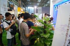 Shenzhen Tea Expo Stock Photos