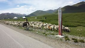 Shepard i Kirgizistan Arkivfoton