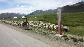 Shepard w Kirgistan Zdjęcia Stock