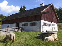 Shepards cottage. Cottage of a shepard with two sheep in front stock photography