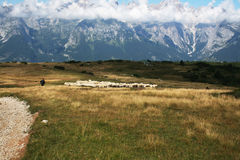 Sheperd control the flock grazing over the Brenta Royalty Free Stock Images