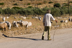 Sheperd, das seine Herde betrachtet stockbilder