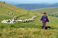 Sheperd e rebanho dos carneiros Imagem de Stock Royalty Free