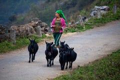 Sheperd femminile Vietnam del Nord Fotografia Stock Libera da Diritti