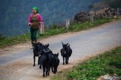 Sheperd femminile Vietnam del Nord Immagine Stock Libera da Diritti