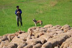 Sheperd, Hortobagy National Park, Hungary. A shepherd is taking care of the sheep. 25. April is the day when shepherds drive out their animals to the fields and Royalty Free Stock Photo