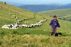 Sheperd and sheep herd. On Sureanu Mountains Royalty Free Stock Image