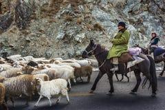 shepherd imagem de stock
