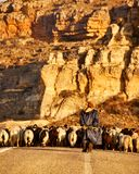 shepherd Fotografie Stock
