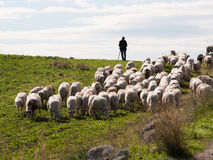 Shepherd And Flock Royalty Free Stock Image