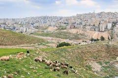 Shepherd apprécier la belle vue d'Amman, la capitale de la Jordanie, d'une des collines tout près Images stock