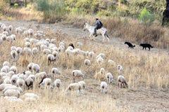 Shepherd auf Eselrückseite mit Hunden in Andalusien Stockfoto
