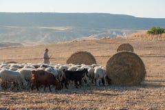 Shepherd avec ses moutons et chèvres de pâturage dans un domaine avec des balles de foin dans le vilage de Troulloi, Chypre Photographie stock