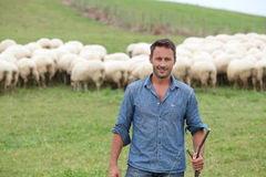 Shepherd with cattle in background Stock Image