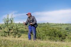 Shepherd con el pasto de las ovejas que se inclinan en su palillo Imágenes de archivo libres de regalías