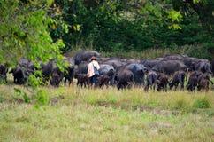 Shepherd con sus búfalos de agua, Srí Lanka fotografía de archivo