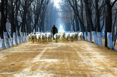 Shepherd on country road. Winter, shepherd on country road royalty free stock images