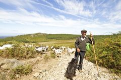 Shepherd in the countryside from Portugal. Shepherd with his flock in the countryside from Portugal Stock Image