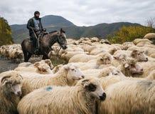 Shepherd with crook riding horse and herding group of sheep. Zhinvali village, Mtskheta-Mtianeti, Georgia - October 21, 2016: Shepherd with crook riding a horse royalty free stock photos