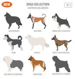 Shepherd dog breeds, sheepdogs set icon isolated on white . Flat Stock Photo