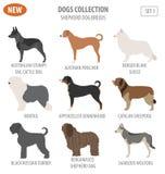 Shepherd dog breeds, sheepdogs set icon isolated on white . Flat. Style. Vector illustration Royalty Free Stock Photography