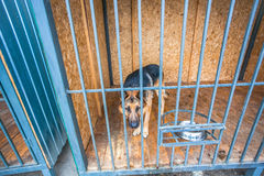 Shepherd dog in the crate in shelter Royalty Free Stock Photos