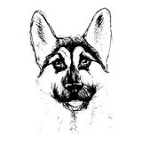 Shepherd dog head portrait of a character graphic, icon, waterco Stock Photos