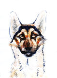Shepherd dog head portrait of a character graphic, icon, waterco Royalty Free Stock Photography