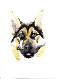 Shepherd dog head portrait of a character graphic, icon, waterco Royalty Free Stock Image