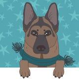 Shepherd Dog in Scarf Stock Image