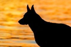 Shepherd dog silhouette Stock Image