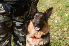 Shepherd dog sit by leg. Dog expert training. shepherd dog sit by leg Royalty Free Stock Photo