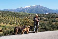 Shepherd with dogs, Spain. Stock Image