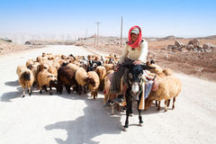 Shepherd on donkey leads his sheep Royalty Free Stock Photography