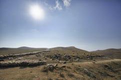 Shepherd drives on the mountain route an attara of sheep, the desert mountain area, Azerbaijan Stock Photo