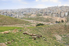 Shepherd enjoying the beautiful view of Amman, the capital of Jordan, from one of the hills nearby. Royalty Free Stock Photography