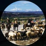 Shepherd Royalty Free Stock Photography