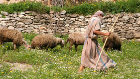 Shepherd and Flock Royalty Free Stock Photo