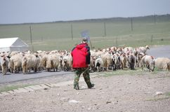 Shepherd With Flock Stock Images