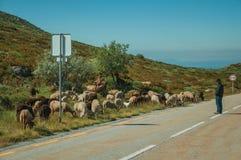 Shepherd with flock of goats grazing beside road. Serra da Estrela, Portugal, July 14, 2018. Shepherd with flock of goats grazing beside road, at the Serra da royalty free stock photos
