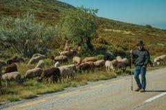 Shepherd with flock of goats grazing beside road. Serra da Estrela, Portugal, July 14, 2018. Shepherd with flock of goats grazing beside road, at the Serra da stock photography