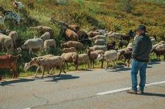 Shepherd with flock of goats grazing beside road. Serra da Estrela, Portugal, July 14, 2018. Shepherd with flock of goats grazing beside road, at the Serra da royalty free stock photo